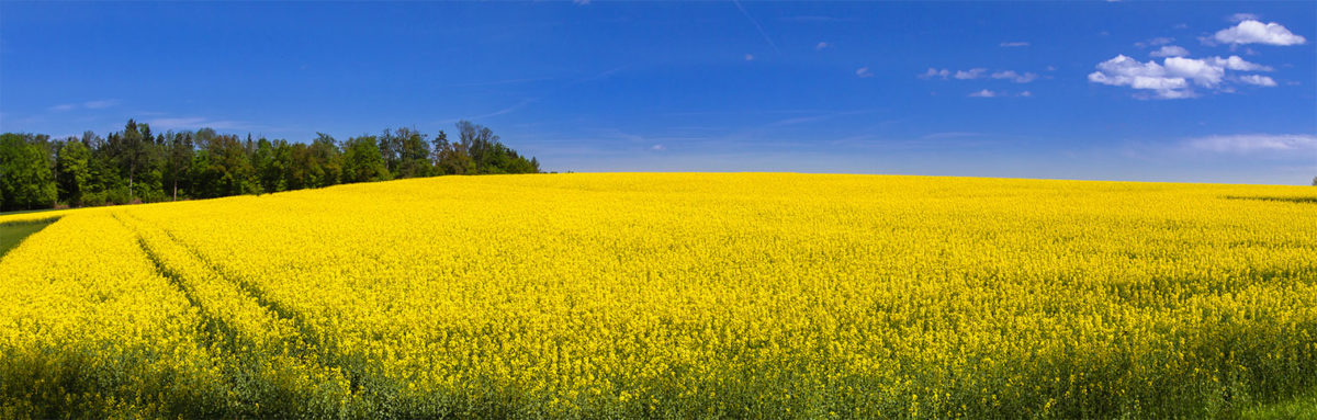 contact us image - energy crop